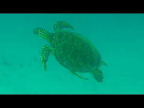 Snorkeling in Linapacan, Palawan, Philippines