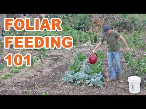 The Why and How of Foliar Feeding Your Garden (Plus Multiple Options)