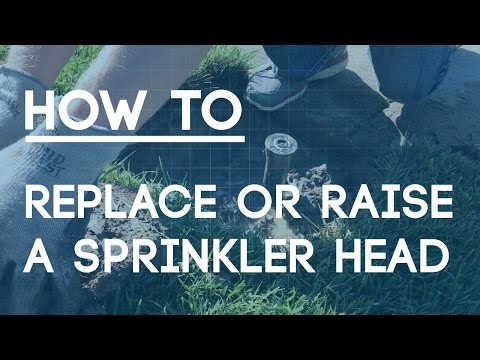 How To Replace or Raise a Sprinkler Head the Right Way