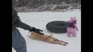 Dog Slides Across the Snow