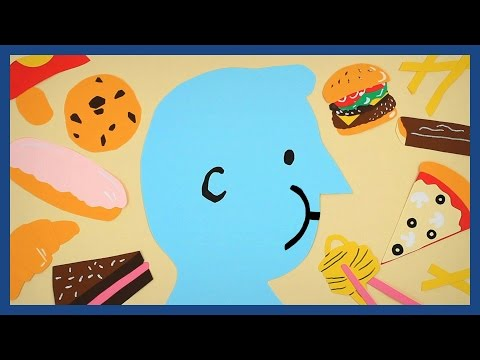 Why are we all getting fat?   Guardian Animations