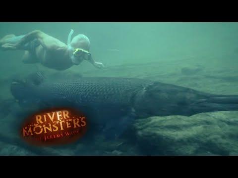 Will Alligator Gars Attack Humans? - River Monsters