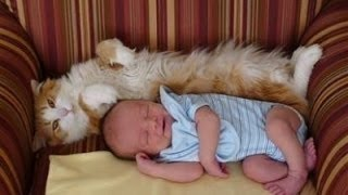 Katzen Treffen Neugeborene zum ersten mal Videoerstellung 2014 [NEU HD]
