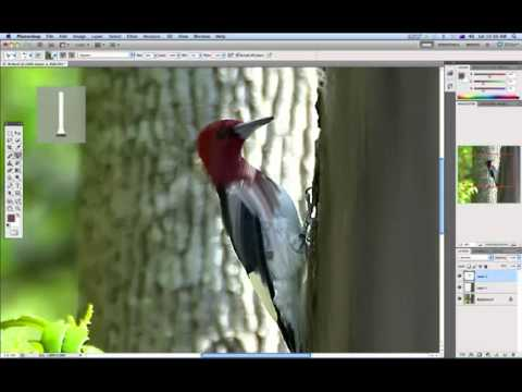 Photoshop CS5 Painting Tutorial Mixer Brush