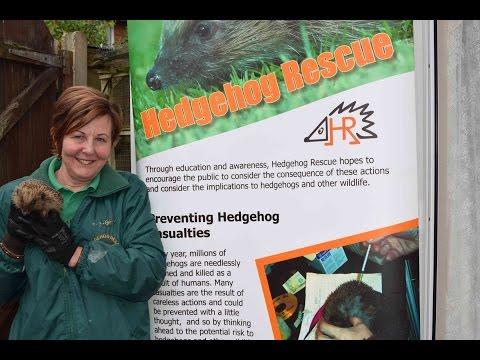Hedgehog Rescue - A Wild Owl TV Special Report