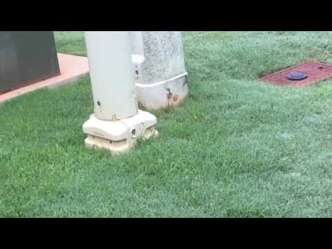 How to get DEEP DEEP GREEN Bermuda grass with Milorganite