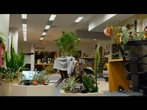 Plantequin Challenge - Olin College