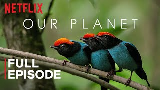 Our Planet   One Planet   FULL EPISODE   Netflix