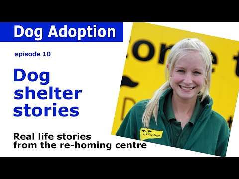Animal Shelter | Dog adoption stories and advice from Dogs Trust | Episode 10