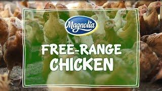 Free range bounty chicken    a backyard hobby   - PakVim net