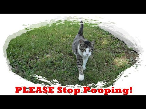Preventing Your Cat from Pooping in the Garden