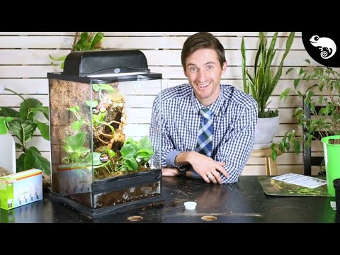 DIY BIOACTIVE ENCLOSURE | Step By Step With Links