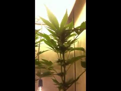 Mini Grow 2