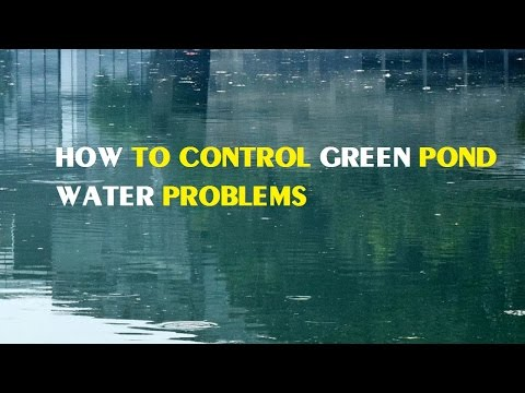 How to Control Green Pond Water Problems