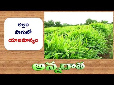 Scientific Tips for Ginger Cultivation || ETV Annadata