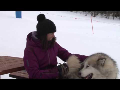 Mt Hotham Snow Report 8th July 2014