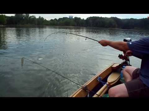 Easy Pan fishing with planer bobbers-how to have success trolling for bass and crappies.