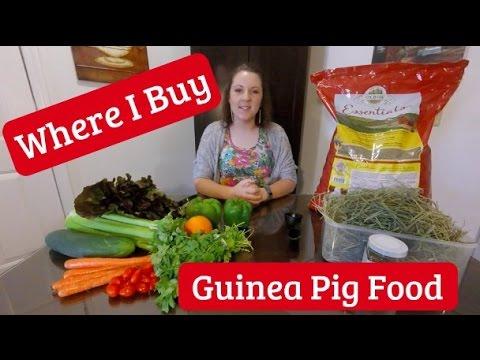 Where I Buy My Guinea Pig Food