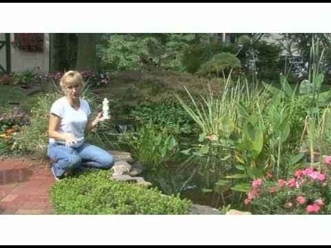 Control Algae in Your Pond with AlgaeFix