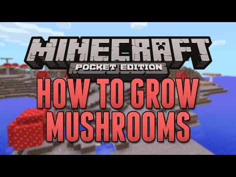 How To Plant & Grow Mushrooms! - Minecraft Pocket Edition (Tutorial)