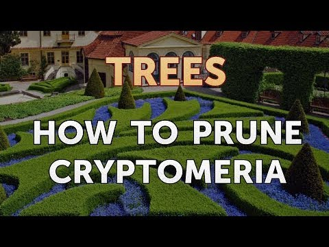 How to Prune Cryptomeria