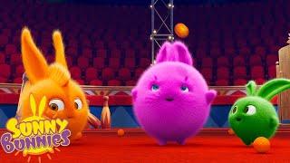 SUNNY BUNNIES - Circus Act   Season 1   Cartoons for Children
