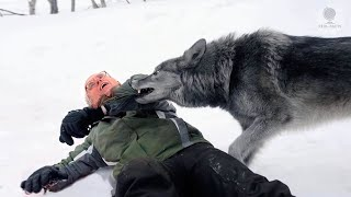 A wolf wanted to attack the wounded man. Suddenly he recognized him as an old friend and saved him