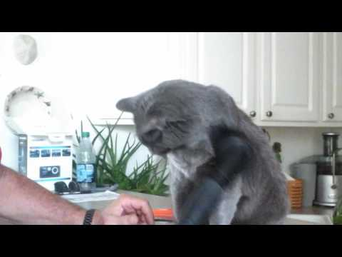 How to keep cat hair under control !