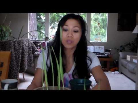 Growing Garlic Greens Indoors