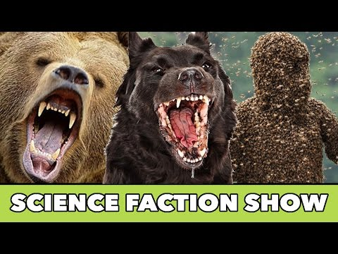 Can Animals Smell Fear ?  - Science FACTion Show