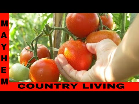 How to grow tomatoes from seed indoors