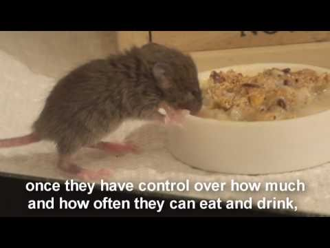 Raising a Baby Mouse 6/10 Dehydration, Bloat
