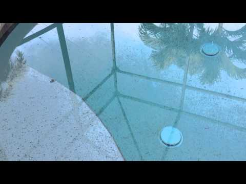 Black Bugs In My Pool! By Sweetwater Pool Service