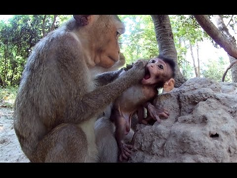 Young monkey mom is taking good care of her baby