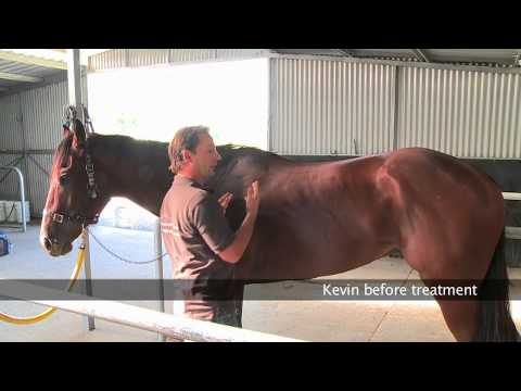 Assess horse back soreness and reaction points with Christian Langeder