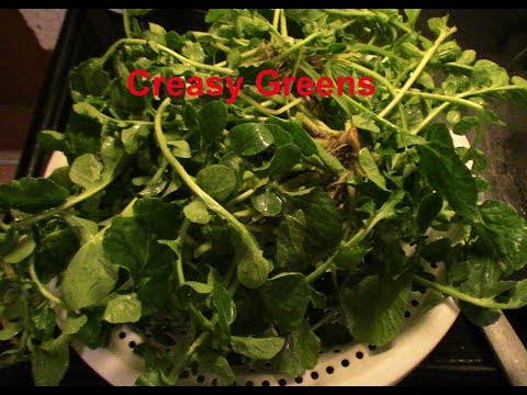 How to cook southern creasy greens also known as Highland creasy greens