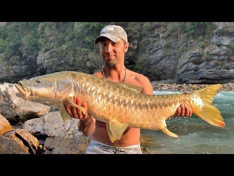 Fishing in Nepal river   record Golden Mahseer (138cm)    big fish caught