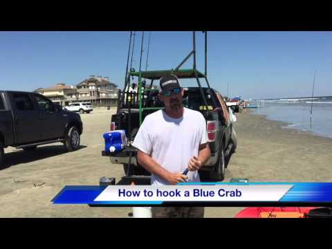How to hook a Blue Crab
