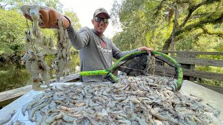 Thousands of WILD SHRIMP with a Big Net (How To Catch & Cook)