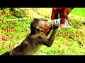 Download  Lori Come So Fast For Milk, Poor Baby Lori Can&'t Live Without Red Cow Milk  MP3,3GP,MP4