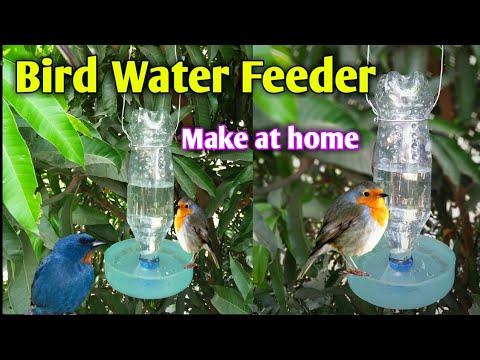How to make A bird water |Plastic bottle bird water Feeder save bird's
