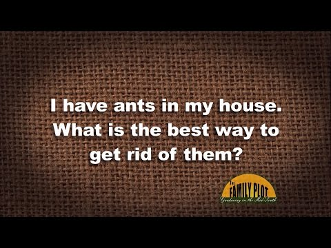 Q&A - How do I get rid of ants in my house?