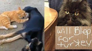 Cat Funny Video Complition Dog Feed Cat Milk