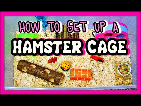 HOW TO SET UP A HAMSTER CAGE | New Hamster Owners