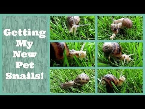 Getting My New Pet Snails!