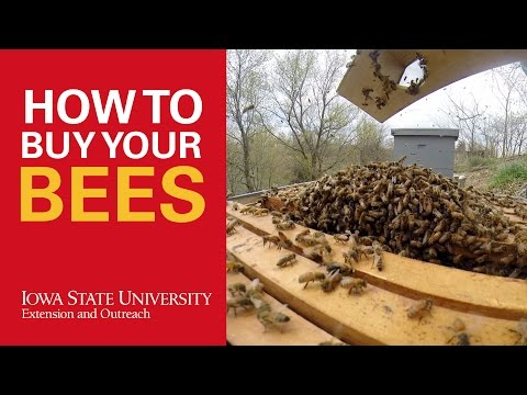 How to Buy Bees for Beekeeping
