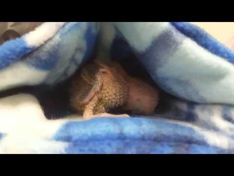 A baby bird is sleeping peacefully