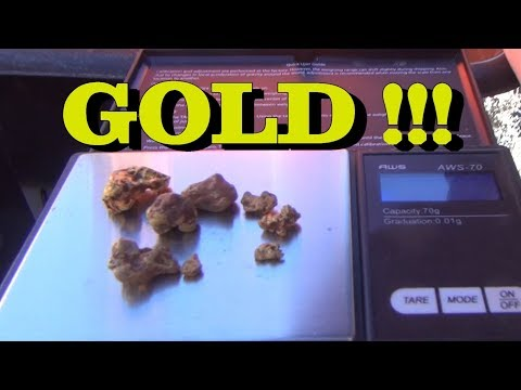 LARGEST AMOUNT OF GOLD NUGGETS FOUND  !!!!! From Our Claim. ask Jeff Williams