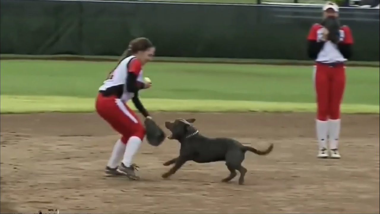 Most Unexpected Animal Interference Moments in Sports   Funny Invasions & Interruption