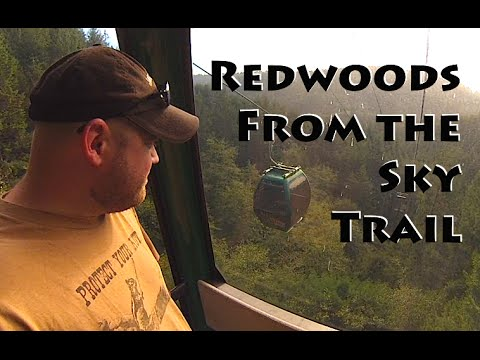 Redwoods: Trees of Mystery ~ Sky Trail
